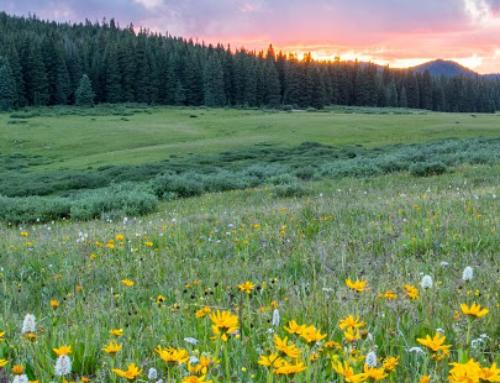 The Colorado Sierra Club + ARE Solar